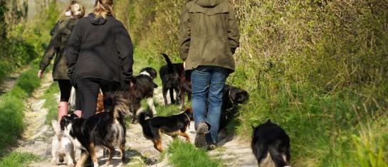 Dog Walker in Eastbourne