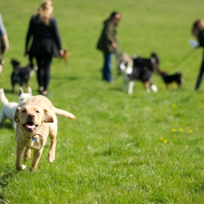 Dog Walker in Eastbourne
